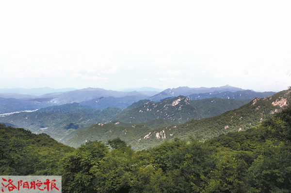 老君山林场森林覆盖率高达98%