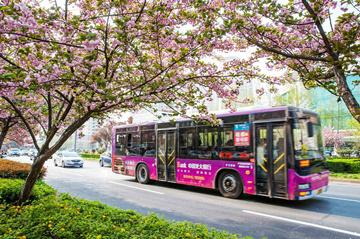 今起,洛阳市公交新增5条临时旅游专线 票价1元