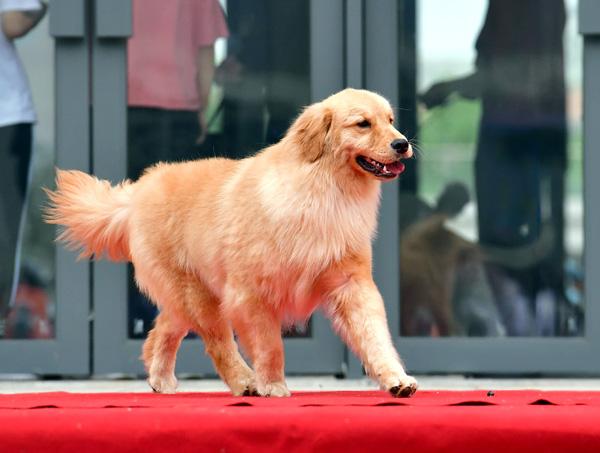 洛阳养犬人注意!请规范城市养犬行为 否则可能违法